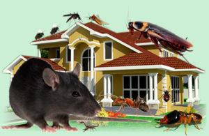 pest control quote muirlea